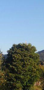 まだ50代 皆さん^^ コンチーは~~ 今日は青空☀ 木のてっぺんに鷺が〰〰   ただいま整形の順番待ち(&gt