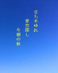 あい子の部屋 立ち木ゆれ    青空深し    今朝の秋           蒼 月