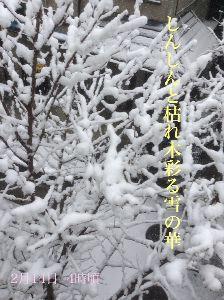 あい子の部屋         しんしんと枯れ木彩る雪の華   .