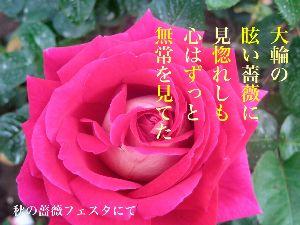 あい子の部屋 .         大輪の眩い薔薇に見惚れしも心はずっと無常を見てた    .
