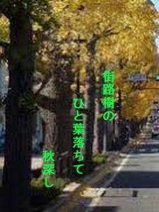 あい子の部屋 街路樹の   一葉落ちて      秋深し