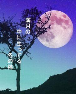 あい子の部屋  満月の      中に生ってる          冬の柿