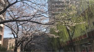 3924 - (株)ランドコンピュータ 桜の季節を待つの様、時期が遠いが、必ずくる