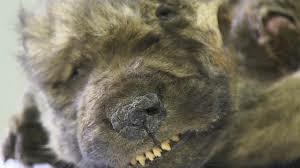3053 - (株)ペッパーフードサービス マイナス40℃で保存すれば、賞味期限なしの永久凍土。 北芝犬 !