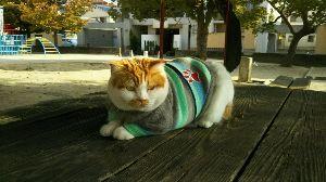 8001 - 伊藤忠商事(株) 株猫ジョージ君がコメント出しました。 上海が4%超えの急騰でNY市場は大幅高を予想するニャンコ。 A