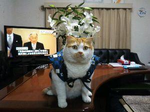 8001 - 伊藤忠商事(株) 株猫ジョージ君が期待しています。 地合いが良くなったニャンコ。 みんなで力を合わせて、2,000円を