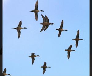8001 - 伊藤忠商事(株) 権利月だし、 配当鳥が 人気の三菱商事、 激安の住友商事に、飛んでっちゃったかな?