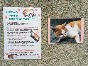 ぶらり昔旅 [訃報] 東京の東中野駅東口の住宅街に猫が暮らしていた。 他の猫は人が近づくと逃げていた。 茶トラは