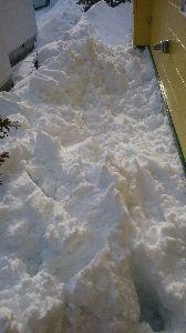 ☆ひとりごと~!☆ domさん、福寿草の花の写真って、もう春ですね、 私の家の周りは ブルブル寒い。