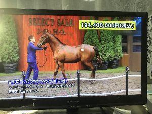 競馬シーズン到来だぁ こっちは、1億9000万、 高すぎ〜 泣。