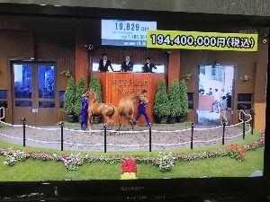 競馬シーズン到来だぁ デュラメンテとアイムユアーズの子、 1億9000万、 すごすぎ〜泣。