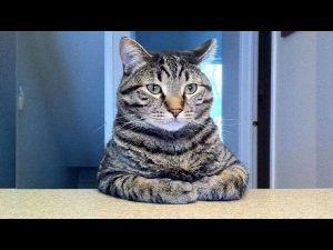 猫の画像がほしいです 猫狩り人の虚偽虚言注意報です 騙されない様に気を付けましょう