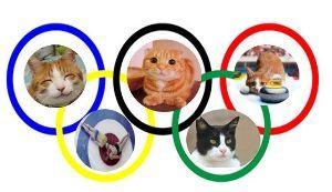 猫の画像がほしいです ねこカーリング 気に入ったわ   真似して左は人間カーリング