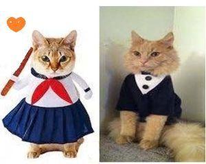 猫の画像がほしいです こんにちは ヾ(=゚・゚=)ノニャン♪  アルマーニの洋服よ。   猫会の学生服 にあうでしょう。