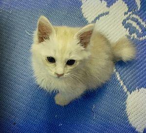 猫の画像がほしいです はじめまして(^ν^) 姉の家で飼ってる猫ちゃんです