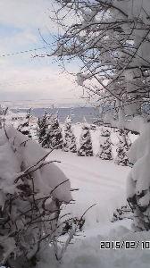 ~ ここから ~ おはよう  立春前に モグラとフキノトウの話題 なのに (;゚Д゚)! 立春後に雪・・・ 昨日の朝は