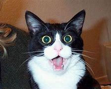 2579 - コカ・コーラ ボトラーズジャパンホールディングス(株) こらぁ~(〃艸〃)  だれだぁ~、コカ・コーラの瓶🤩♬振ったのは💛