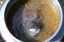 放射性廃棄物最終処分問題について 自分が好きだからといって他人にも犬をかわいがるよう強要するのは問題だ!!      キムチとともに世