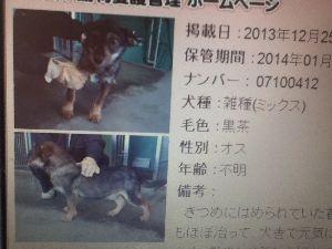 ペットの光と影 熊本の保健所では、今日1月14日で期限が切れる。ただ保護して檻に入れっぱなしではない。お散歩にも連れ