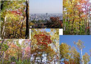 北国の人 こんにちは 今日も午前中は良い天気です、ちょっと早めに市内旭ヶ丘公園に紅葉の写真を撮りに行ってきまし