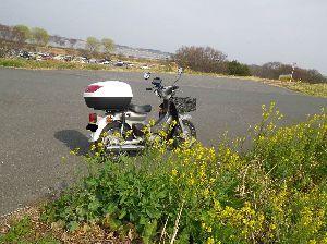 千葉県発!バイク遊びしませんか? 渡良瀬遊水地の土手には菜の花が咲き始めていました。 朝晩は寒いですが日中はポカポカ陽気が増え始めまし