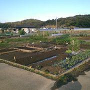 家庭菜園興味ある人集まれ!!≪宮崎県の人が憩う部屋≫