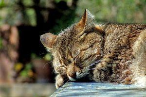 1357 - (NEXT FUNDS) 日経ダブルインバース上場投信 それでは寝ます。相手をしていただいた方には感謝して、おやすみなさい。